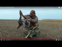 Embedded thumbnail for Охота на гуся 2016. География сезона